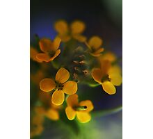 Yellow Wreath (from wild flowers collection) Photographic Print