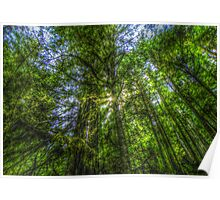 Hoh Rainforest ~ HDR Series ~ Olympic National Park, Washington Poster