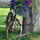 Flowers on an old bike by mltrue