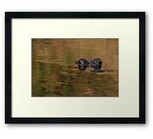 Alligator Dream Framed Print