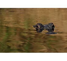 Alligator Dream Photographic Print