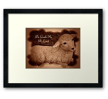 Gentle As A Lamb Framed Print