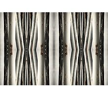 Eucalypt forest • Warrawong Sanctuary, South Australia Photographic Print