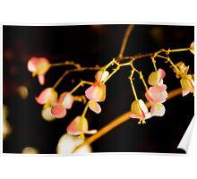 Flower Detail Poster