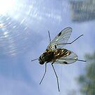 fly, reflecting by armadillozenith