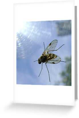 fly, reflecting by armadillozenith