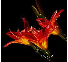 Fire Lillies Photographic Print