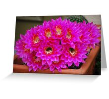 Echinopsis Attack Greeting Card