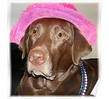"""""""Labrador Diva Named Lexie"""" Poster"""