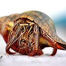 The Hermit Crab 2 by Stormy Brannan
