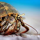 The Hermit Crab 4 by Stormy Brannan