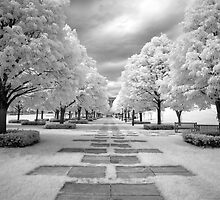 Infrared View of Trees at the Nelson Atkins Museum, Kansas City, Missouri  by Carol M.  Highsmith