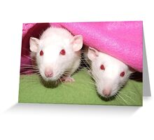Dumbo girls in the pink Greeting Card