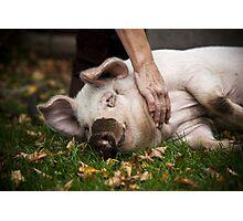Playful Pig Photographic Print