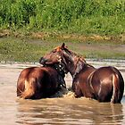 "Bob's, ""Horsing Around the Waterhole"" Calendar by © Bob Hall"