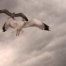 Seagull Flight by Gene Praag