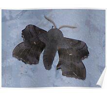 Poplar Hawk Moth 01 Poster