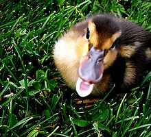 """You """"Quack"""" me up! by Jan  Tribe"""