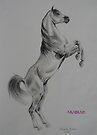 Arabian by louisegreen