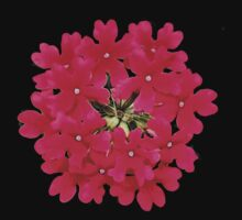 'Red Verbena' by Scott Bricker