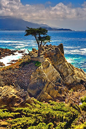 Monterey Lonely Tree by photosbyflood