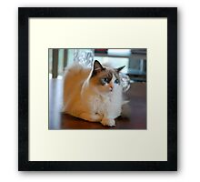 The Latest in Coffee Table Ornaments! Framed Print
