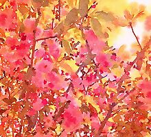 Cherry Blossom Canopy Watercolor by Jacqueline Maldonado