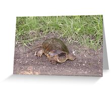 Rare Alligator Snapping Turtle Greeting Card