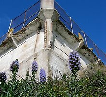 The Flowers of Alcatraz by Matt Clifford