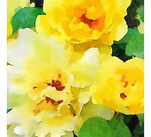 Renew - Yellow Flowers in Watercolor Photographic Print