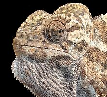 Chameleon With Sinister Facial Expression Isolated by taiche