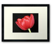 scarlet Framed Print