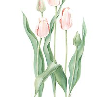 Pink Tulips by Bloominmary