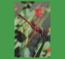 Red Skimmer or Firecracker Dragonfly Closeup One Piece - Short Sleeve