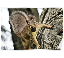 The Playful Squirrel Poster