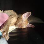 kitten by Jorunn
