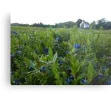 Maine Blueberry Fields Metal Print