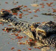 Kakadu croc by Rosie Appleton