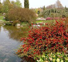 flower garden of Tête d'Or,Lyon,France by KERES Jasminka