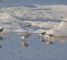 Sanderlings and Surf by Bryan D. Spellman