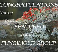Celebrating Fungilious... by LindaR