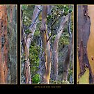 Gum Trees at Lake St Clair by Werner Padarin