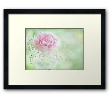 Soft on Peonies Framed Print