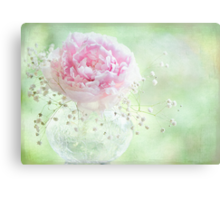 Soft on Peonies Canvas Print