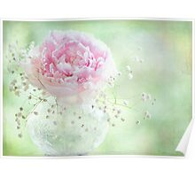 Soft on Peonies Poster