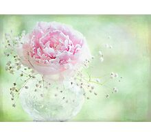 Soft on Peonies Photographic Print