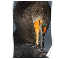 Shy Cormorant Poster