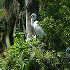 GREAT BLUE HERONS & GREAT EGRETS by Howard & Rebecca Taylor