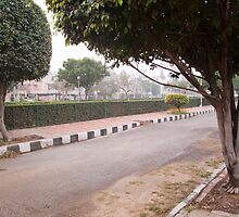 A narrow street running through a park with trees and a green hedge by ashishagarwal74