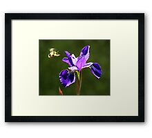 The Bee and the Iris Framed Print